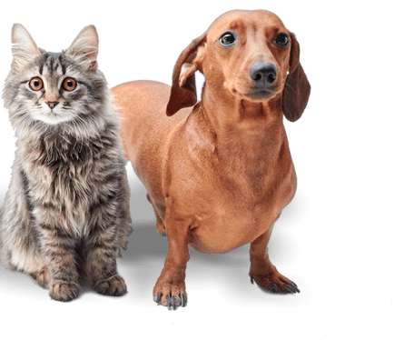 Image of the dog and cat footer image for the International Veterinary Dentistry Institute