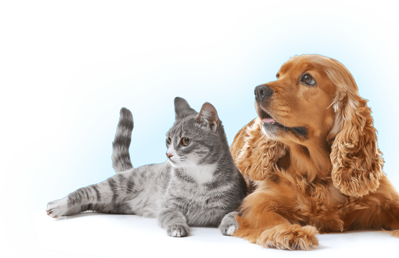 Image of the dog and cat homepage banner for the International Veterinary Dentistry Institute